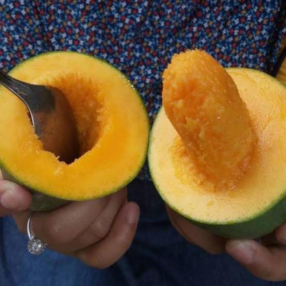 Bibit tanaman buah mangga alpukat klonal 21 Kota Administrasi Jakarta Timur
