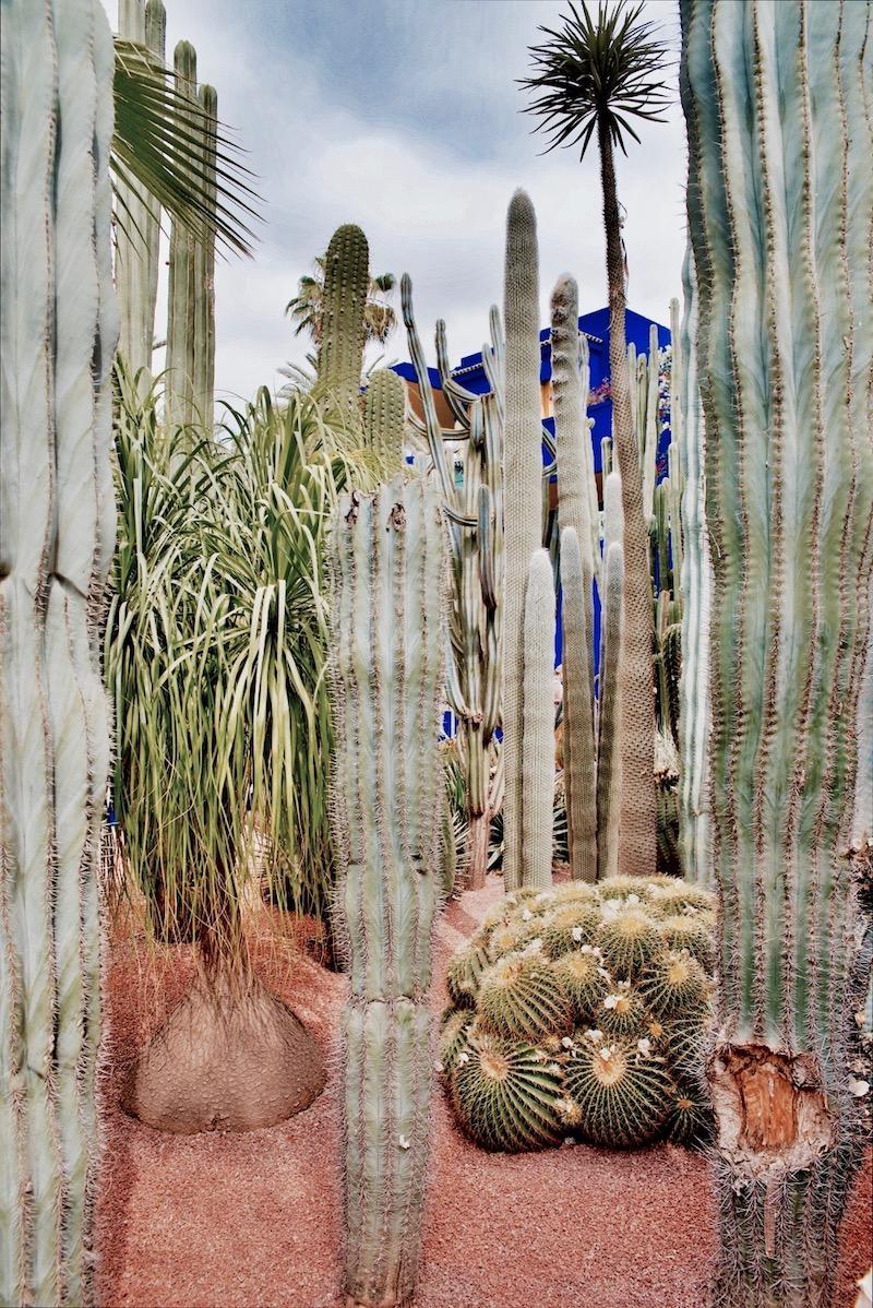marrakesz ogród majorelle, Marrakesz ogród ysl Laurent Jardin majorelle jak powstał