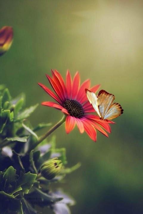 Hoa đẹp và bướm