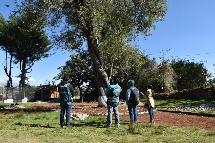 Buscan reconocer al Capulí de Bolívar como árbol patrimonial de Cajabamba