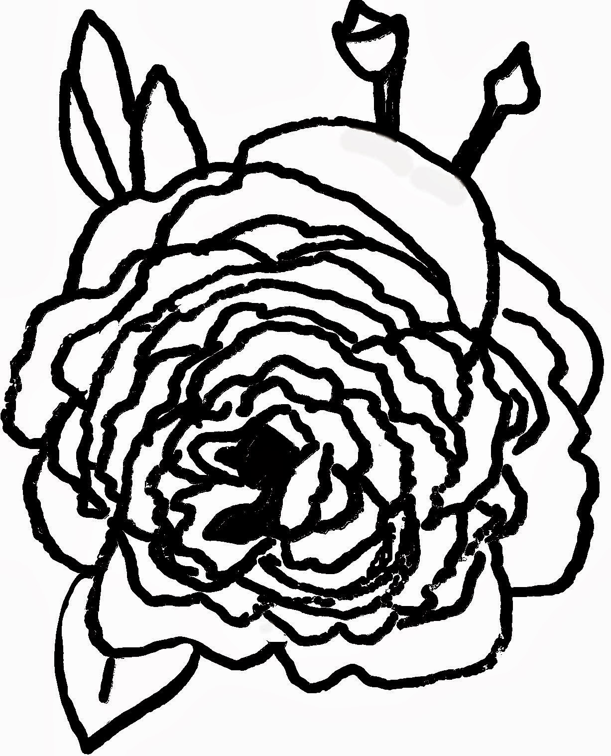 Christian Images In My Treasure Box: Home Drawn Roses