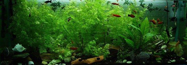 5 Tanaman Aquascape di sawah, di sungai dan yang ada di ...