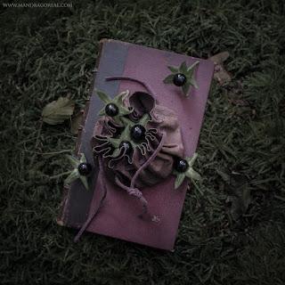 Atropa Belladonna harvest, Deadly Nightshade