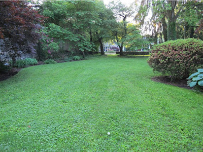 MicroClover Lawn Pros and Cons