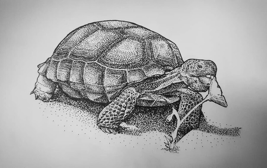 05-Tortoise-eating-Jonny-Seymour-www-designstack-co