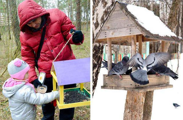 10 cách bạn có thể tạo một khu vườn mời gọi chim chóc tới làm tổ