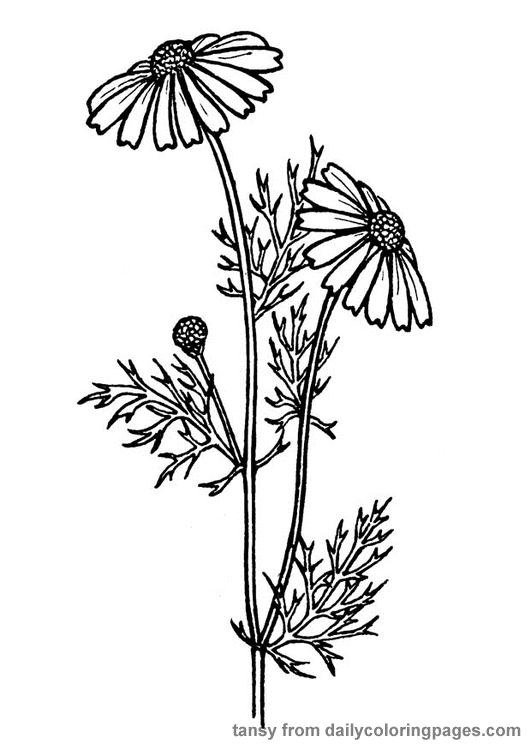 clic de ideias: {flores, plantas e 8 free printables} by ...
