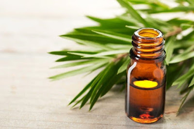 Remove Pimple Scars by tea tree oil
