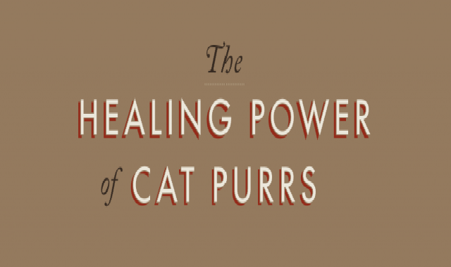 The Healing Power of Cat Purrs #infographic