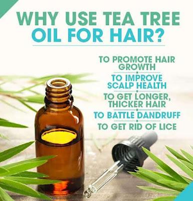 natur shampoo tea tree oil untuk rambut ketombe