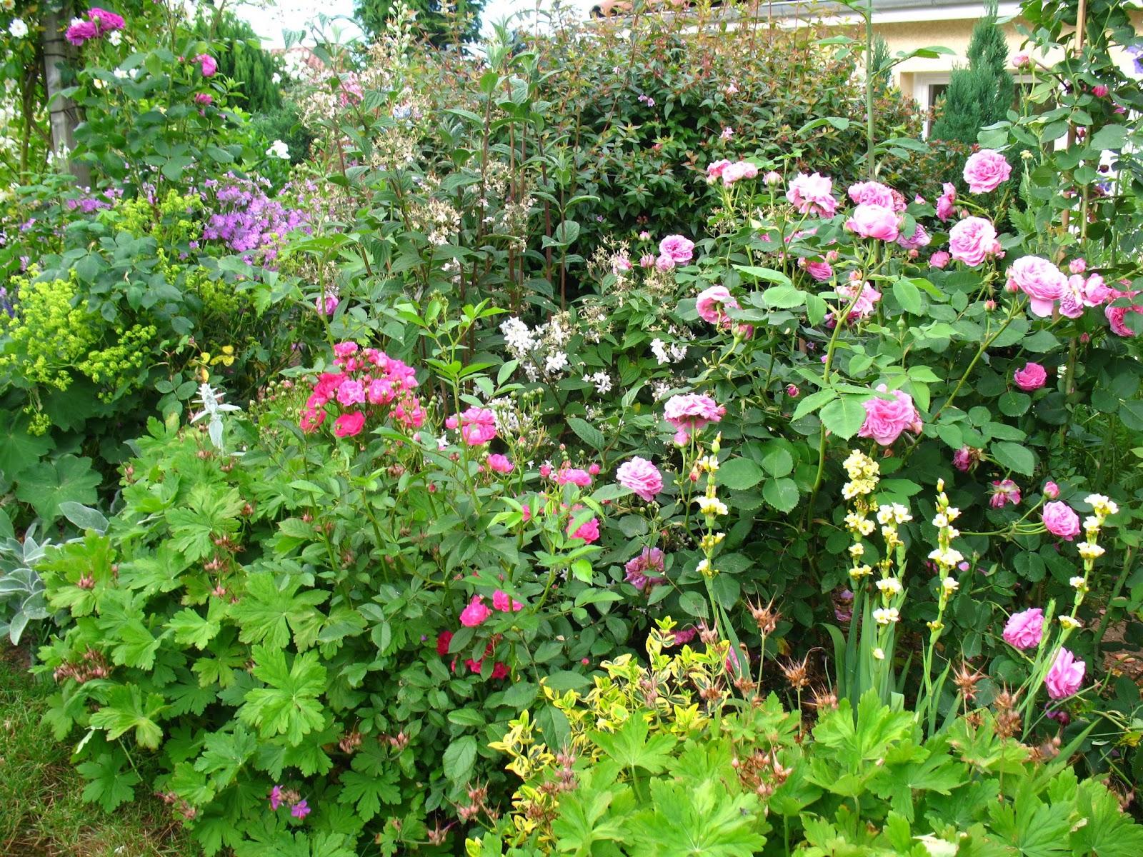 roses du jardin ch neland rosier louise odier. Black Bedroom Furniture Sets. Home Design Ideas
