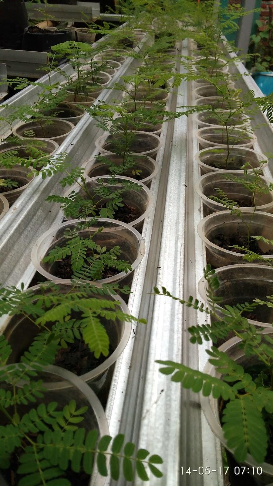 Kebun Hidroponik Tanpa Greenhouse Kendala Umum Dan