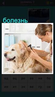 в клинике происходит осмотр заболевшей собаки ветеринаром 667 слов 3 уровень