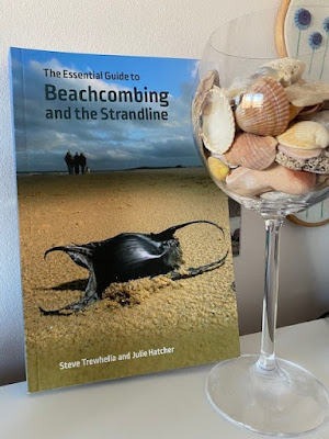 Beachcombing book and shells on display in a large wine glass