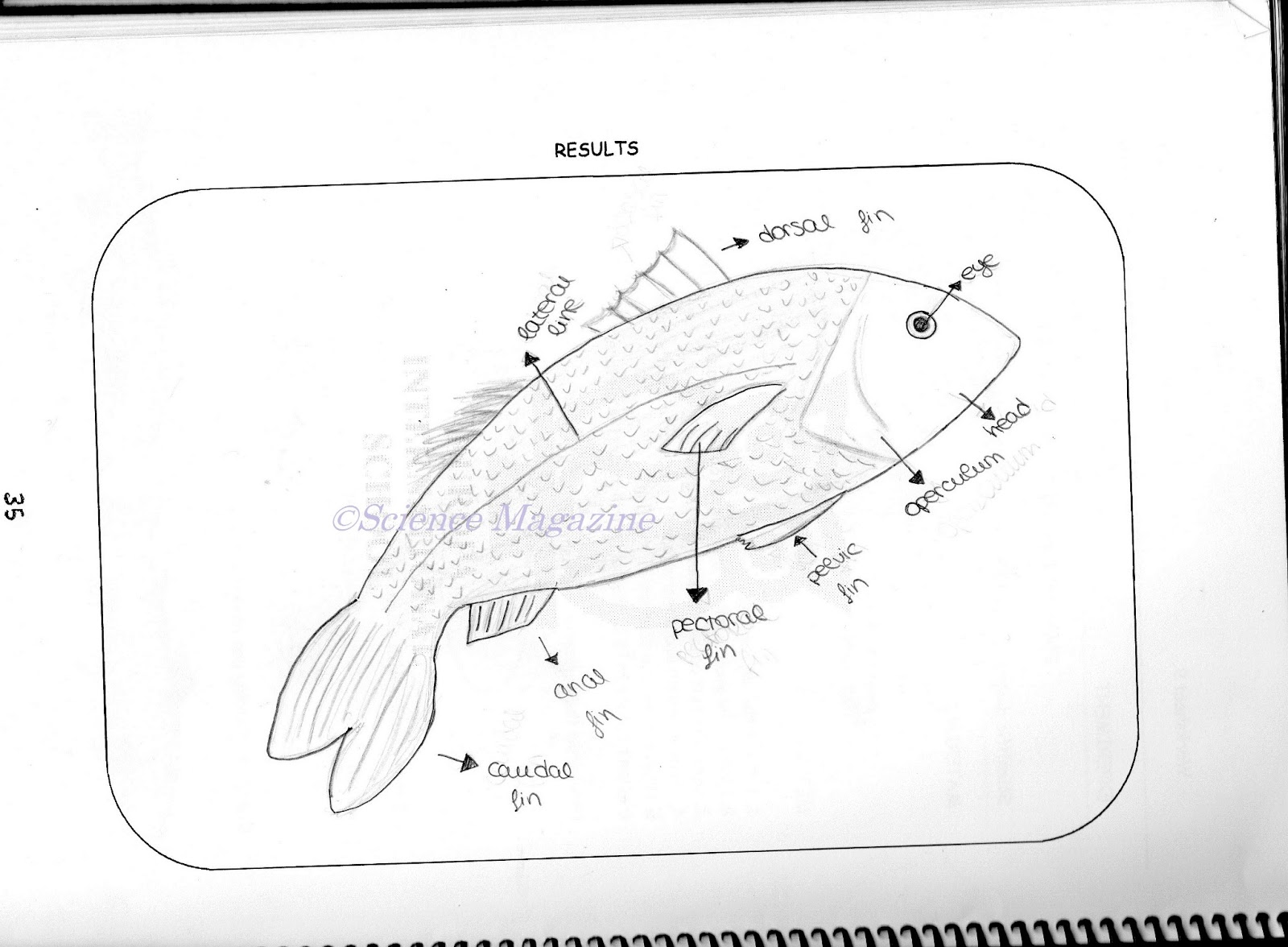 Science Magazine Studying The Anatomy Of A Fish