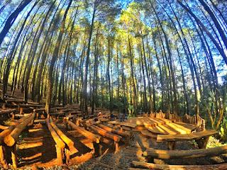 hutan pinus mangunan yogyakarta