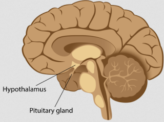 symptoms of pituitary tumor