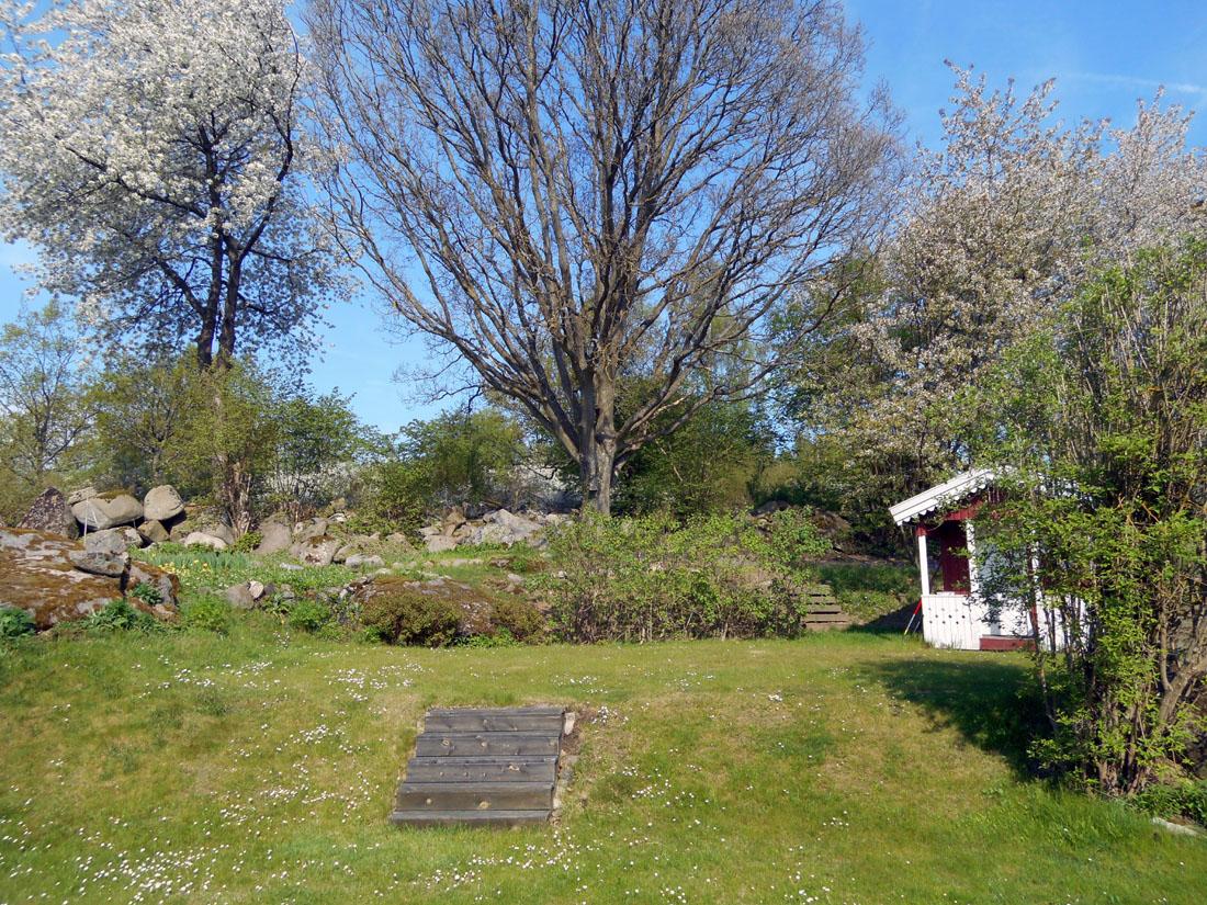 Il mio giardino, 11 maggio 2016