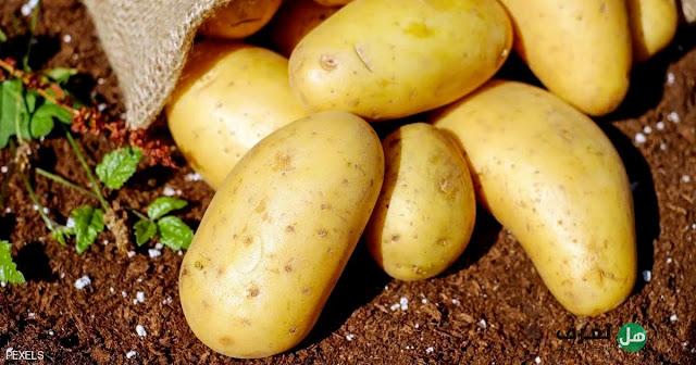 هل تعرف, فوائد البطاطس وأهم المعلومات عنها ؟