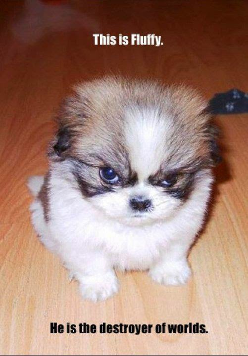 Image of: Pics Funny And Cute Dogs Funny Cute Puppies And Kittens Lol Picture Collection Funny And Cute Dogs Lol Picture Collection