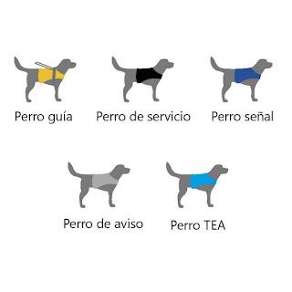 Los perros guía son diferentes según el color de su funda