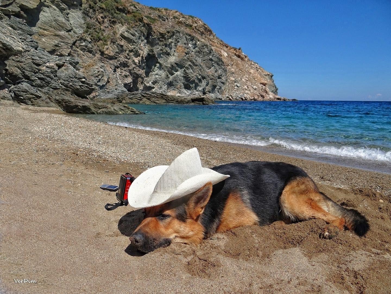 σκύλος-παραλία