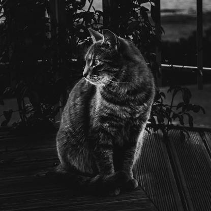 low light photo of a tabby cat