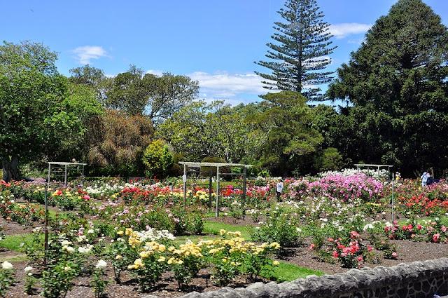 Kết quả hình ảnh cho Parnell ở Auckland