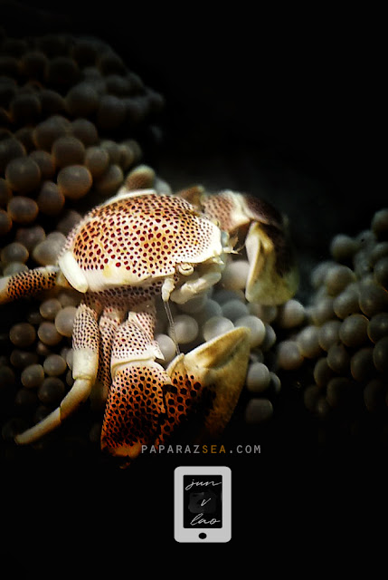 Underwater Mobile Phone Photography, Underwater Photography, Weefine Smarthousing Revieew
