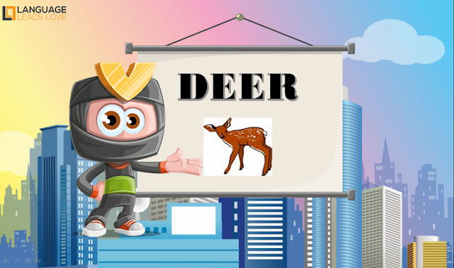 [Animals 11] Deer l How to Teach animals for kids