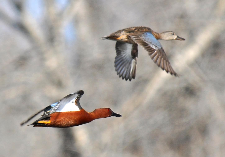 200 Birds Adventures In Bingham County Idaho