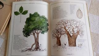 inwenatrz drzew w srodku