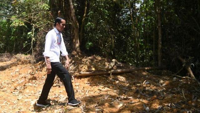 Cari Lokasi Ibu Kota Baru di Kalteng, Jokowi: Saya Nemu Feeling