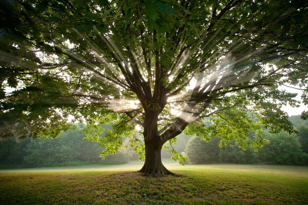 trees23.jpg