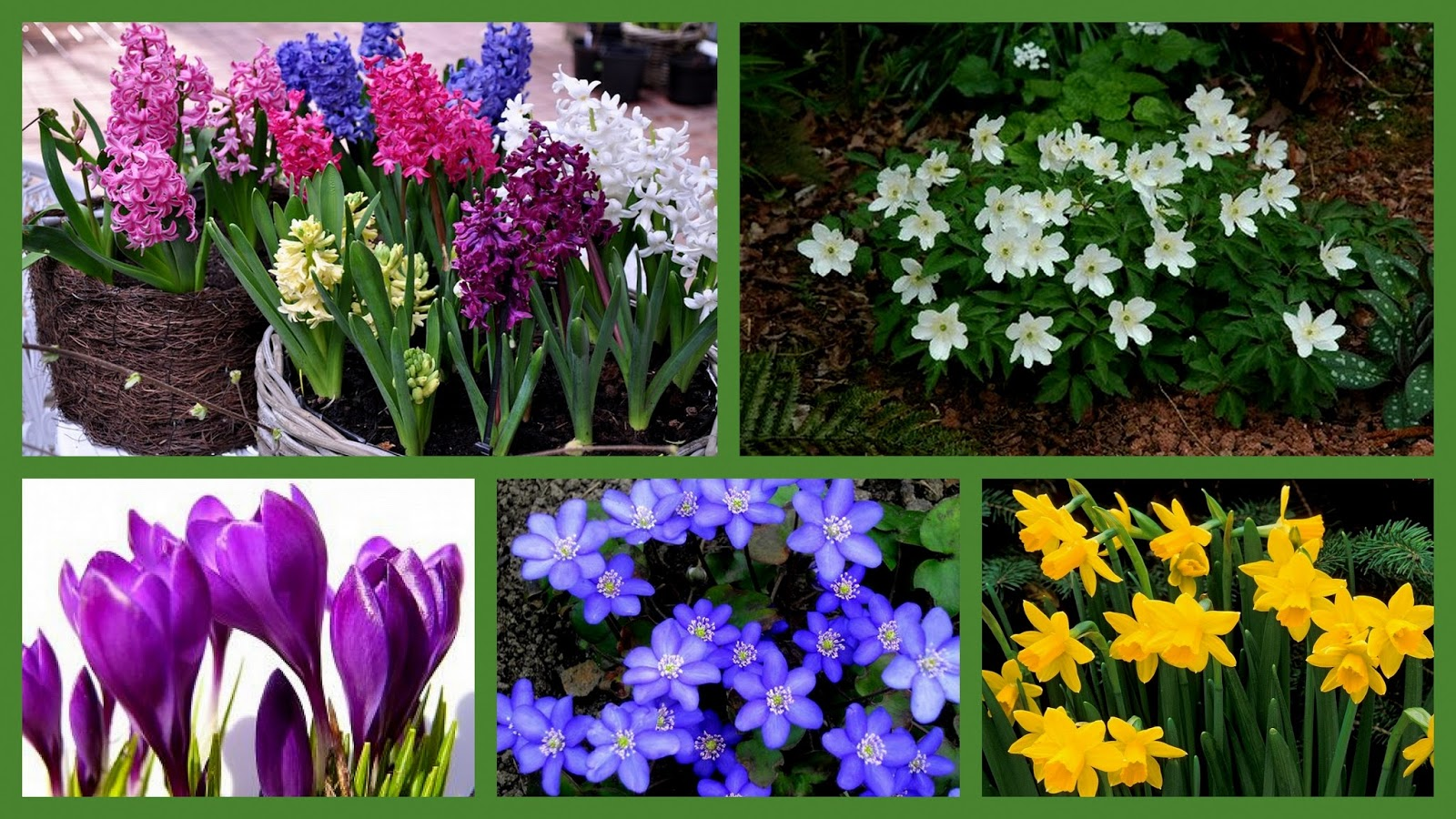In English Pleaseee Names Of Spring Flowers