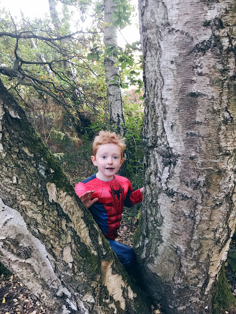 Little boy standing in a gap of a tree