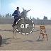 حمارة بلقاس تنافس الخيول العربية في القفز من على الحواجز شاهد لماذا هي بالذات بخلاف باقي الحمير