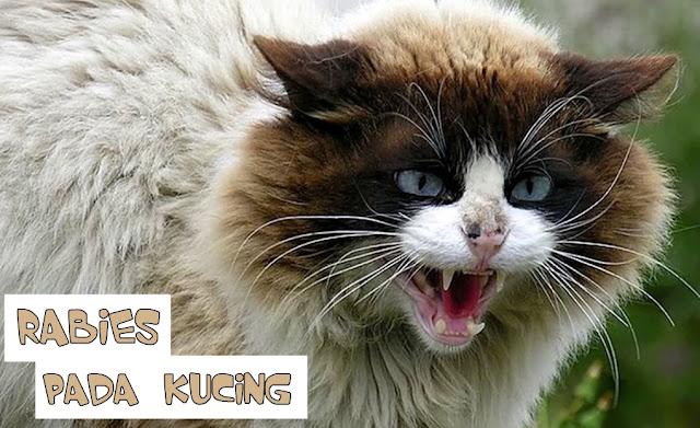 Cakaran Kucing Rabies