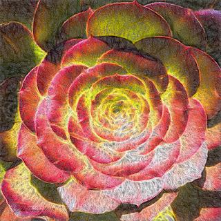 """Succulent """"Aeonium"""" #2"""