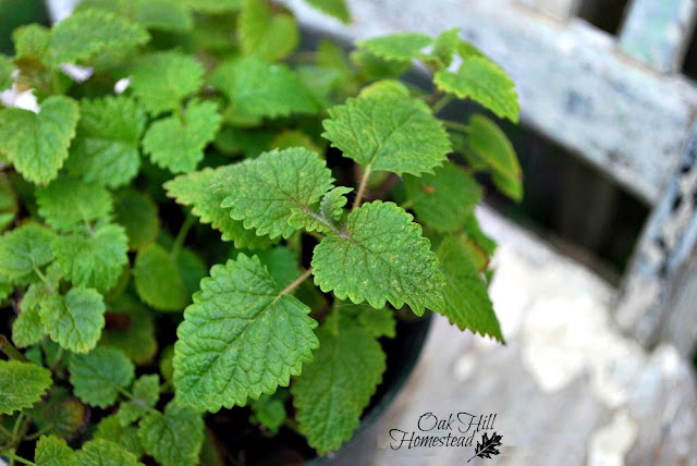 9 plants to grow in your salve garden.