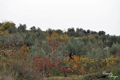 la mayor produccion de la zona son los cerezos, pero como aparece en la imagen también hay olivos y almendros