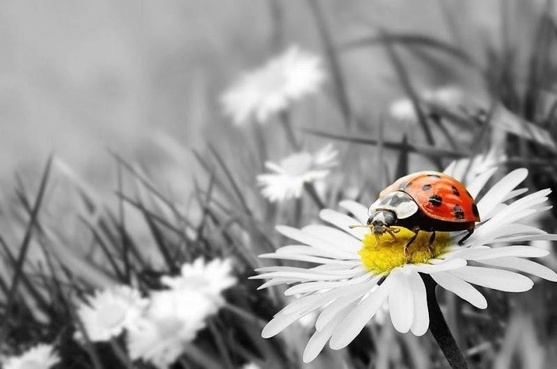Fondos de escritorio de catarinas mariquitas ladybug ladybird bloggergifs - Fondos de escritorio animados ...