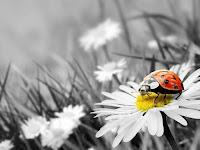Fondos de Escritorio de Catarinas, Mariquitas, Ladybug, Ladybird