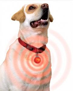 fabula El Perro con campanilla