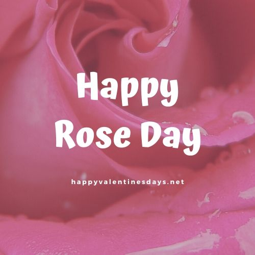 Happy Rose Day 2020 : Wishes GIF Images Quotes Photos Pictures Pics Status Shayari Messages
