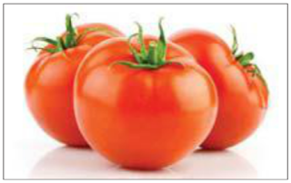 Few Lines About Tomato