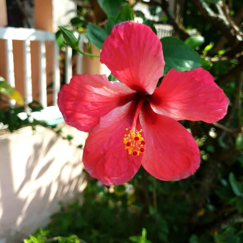 Wordless Wednesday : Bunga-bunga tok ayah