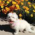 Τι προκαλούν στο τρίχωμα του σκύλου τα τσιπούρια και οι ψύλλοι;