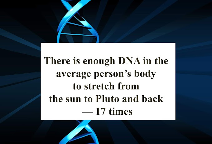 There is enough DNA in the average person's body to stretch from the sun to Pluto and back - 17 times