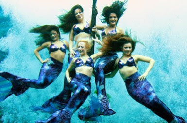 Auditioners give it their all to try and become the next ... |Meet Weeki Wachee Mermaids